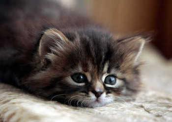cat31.jpg
