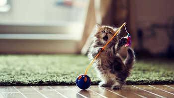 cat54.jpg