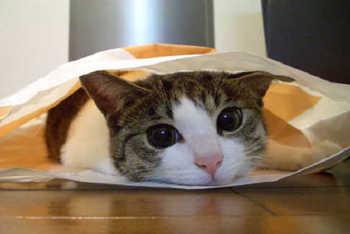 cat637.jpg