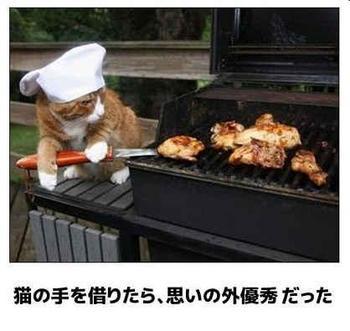 cat793.jpg