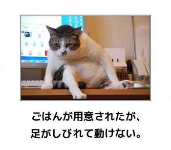 cat794.JPG