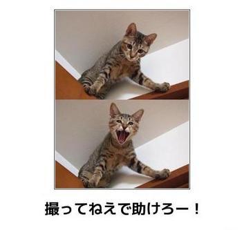 cat795.JPG