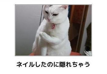 cat796.JPG