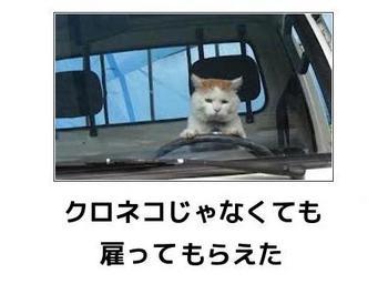 cat91.JPG