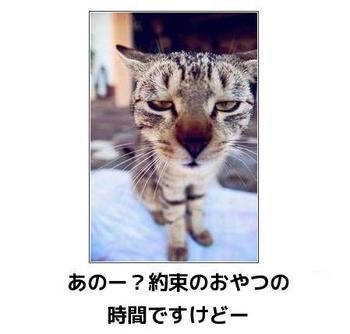 cat92.JPG