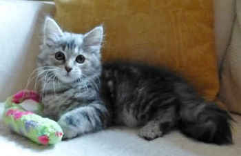 cat943.jpg