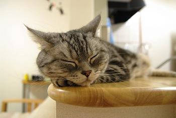 cat953.jpg