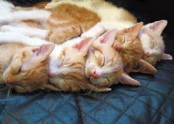 cats08.jpg