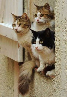 cats2b.jpg