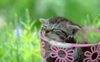cute07.jpg