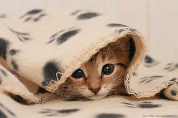 cute24.jpg