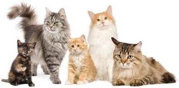 five-cats.jpg