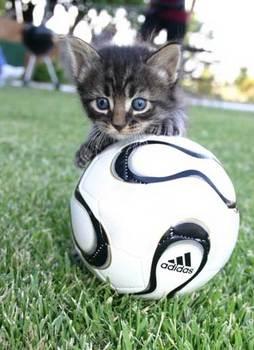 soccer52.jpg